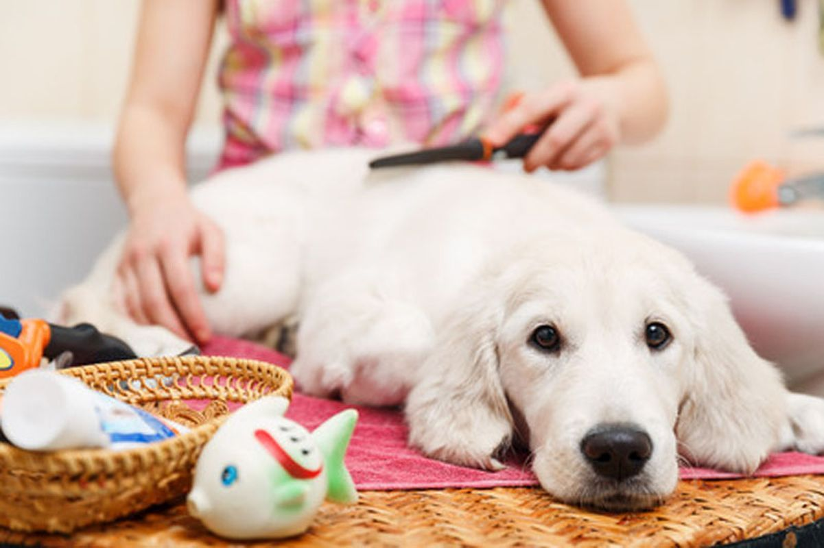 Business Start Up Dog Grooming Course Ncc Training Resources